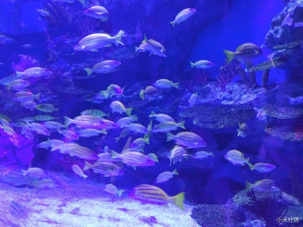 壁纸 海底 海底世界 海洋馆 水族馆 桌面 1152_864